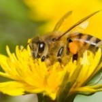 Christina Sarich ~ List Of Foods We Will Lose If We Don't Save The Bees