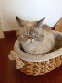 cat_scowling
