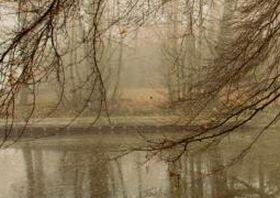 rp_smallman_trees.jpg