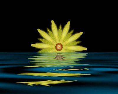 LotusRising