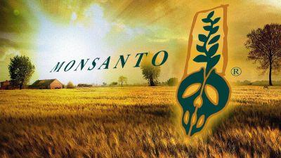 Monsanto_GMO1