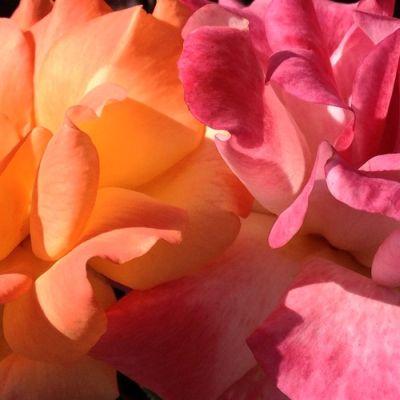 flowers_redOrangePink