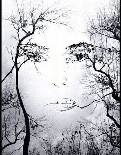 FaceThroughTrees