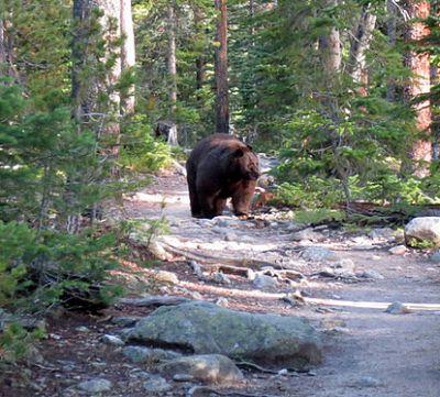 BearWaterRocksGrassTree