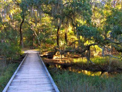 From Wise Owl Raven Taken On Episto Island, South Carolina