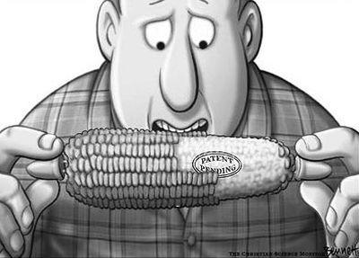 GMO-CornPatentPending